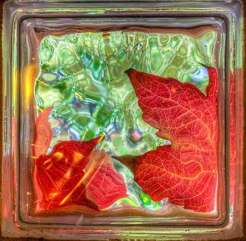 Golden autumn leaves through glass brick window van Sasha Samardzija
