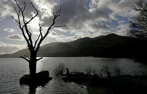 Loch Lomond van