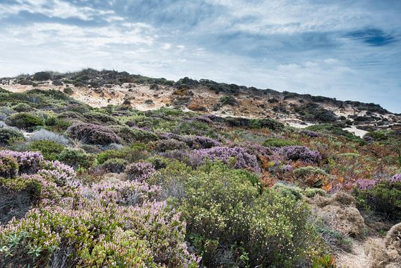 dune plants as erica and beautiful sky