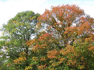 Herfstkleuren van richard de bruyn
