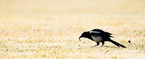 Bird eating van
