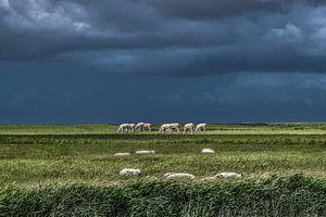 Koeien in het Noorderleeg met schapen op de voorgrond