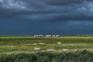 Koeien in het Noorderleeg met schapen op de voorgrond van
