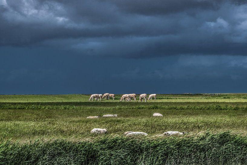 Koeien in het Noorderleeg met schapen op de voorgrond van Harrie Muis