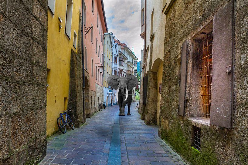 Stadtspaziergang von Ursula Di Chito