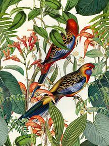 Vögel im Tropenparadies von Andrea Haase