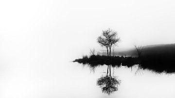 Tweelingboom van Lex Schulte