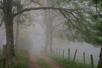 In mist gevangen van