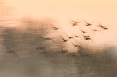 Vogels op weg naar de zon