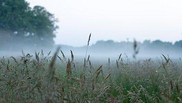 Grasveld sur Merijn Ruijter
