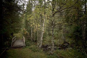 Verlaten brug over de beek in het Noorse bos van Geke Woudstra