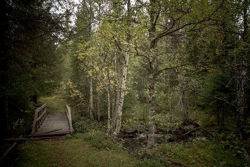Verlaten brug over de beek in het Noorse bos
