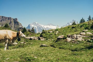 Beige Kuh in den Bergen von Patrycja Polechonska