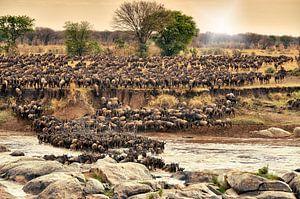 Kudde gnoes te steken op hun jaarlijkse migratie van de rivier de Mara van