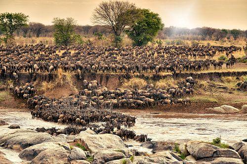 Kudde gnoes te steken op hun jaarlijkse migratie van de rivier de Mara