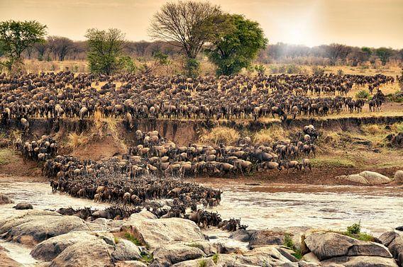 Kudde gnoes te steken op hun jaarlijkse migratie van de rivier de Mara van Jürgen Ritterbach