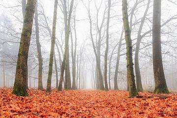 Mistige ochtend in het Roekelse bos van