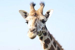 Giraf van