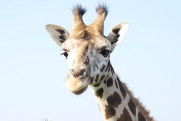 Giraf sur Anita Vromans