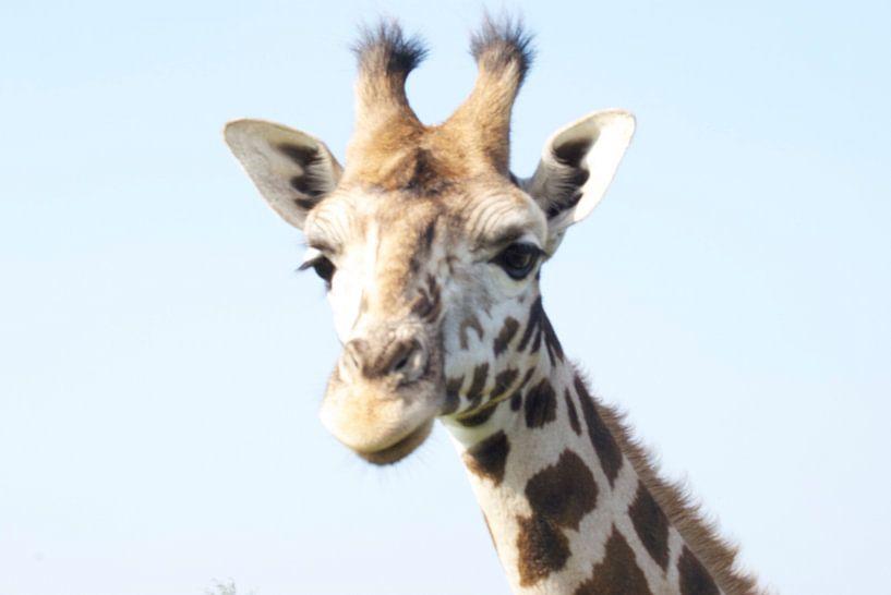 Giraf van Anita Vromans