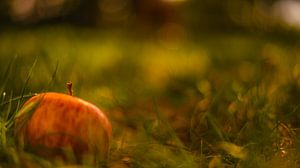 Appeltje in het gras