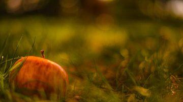 Appeltje in het gras sur Tara Kiers