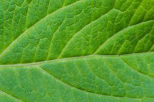Groen blad van