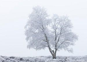 Eenzame berijpte boom van