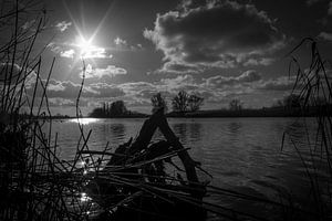 biesbosch landschap tegen de zon in