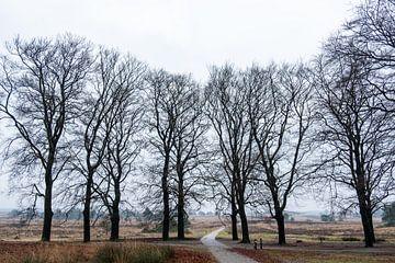 Bomen zonder bladeren op een rij voor het heidelandschap. van Idema Media