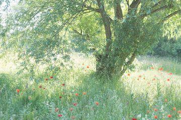 Een romantisch plekje van Birgitte Bergman