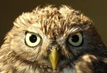 Evil Owl von Nan van Elburg