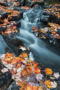 Herfstbladeren in een beek in Acadia National Park, USA