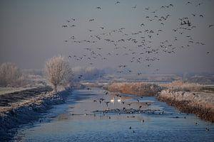 Prachtig hollands winterlandschap ! van