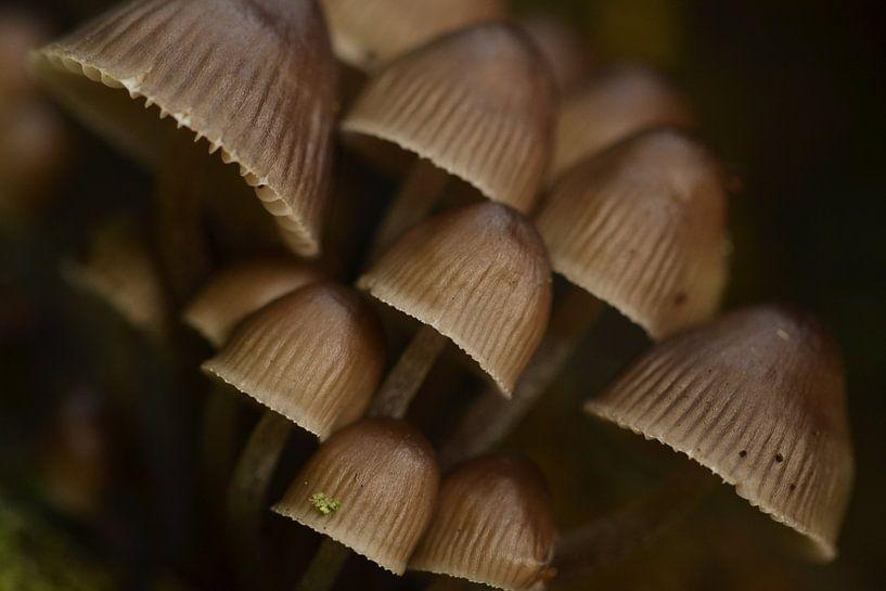 Paddenstoelen groep Midwolderbos van Sascha van Dam