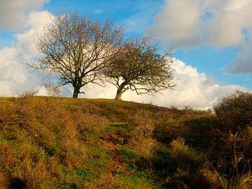 Bomen in de AWD van P van Beek