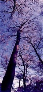 Paarse bomen van Maaike van Stratum