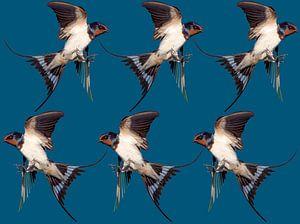 6 vogels