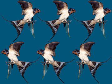 vogel von Felagrafie .