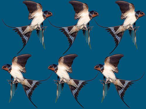 6 vogels van