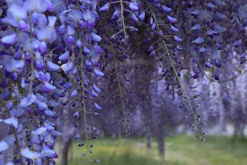 Purple fantasy van Nina Rotim