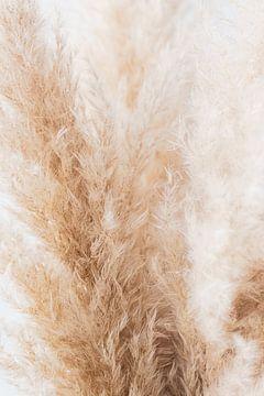 Natürlich, abstrakt, weich, Detail, Fahne, Foto von Debby Loohuis