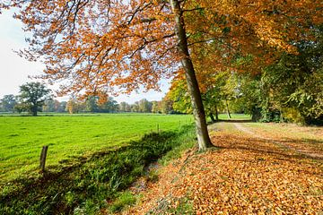 Landschap in herfst met groene wei en kleurrijke bladeren van