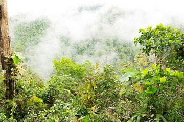 Nebelwald Ecuador $ von Hanneke Bantje