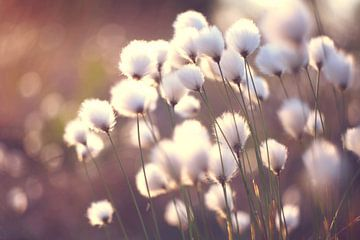 Paardenbloemen - Dandelions -  Pusteblumen van Julia Delgado