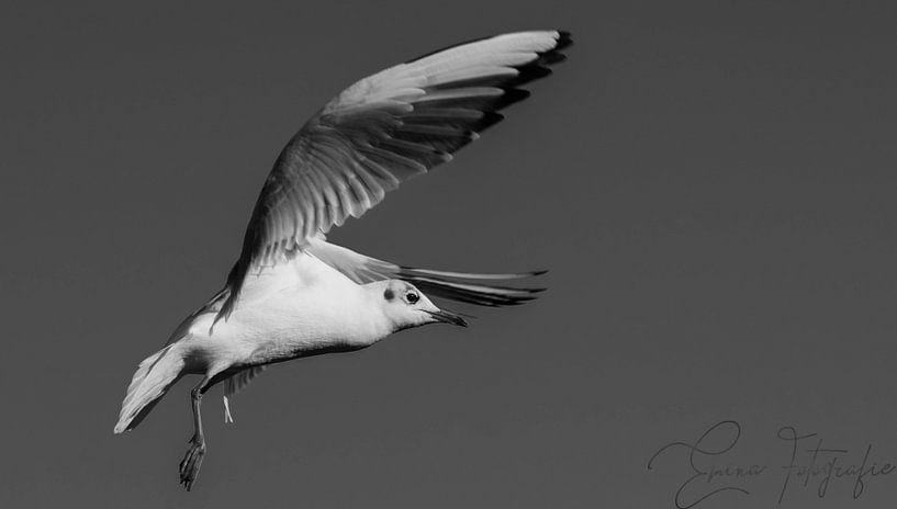 """""""Stille Fliege"""" von Emina Ahmetovic"""