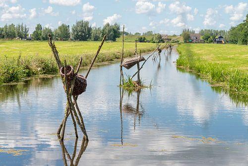 Eendenmanden in sloot polder Alblasserwaard