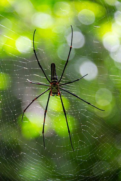 Spin in web van Bram de Muijnck