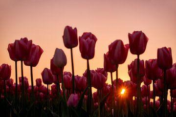 Strahlende Blumen von Myrna's Photography