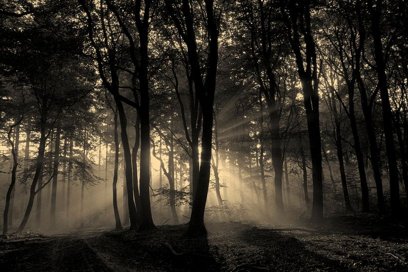 mysterieus mistig bos van Jovas Fotografie